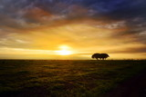 Fototapeta Sawanna - Beautiful landscape with acacia trees in african natural park at sunset