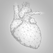Human Heart Internal Organ Tri...