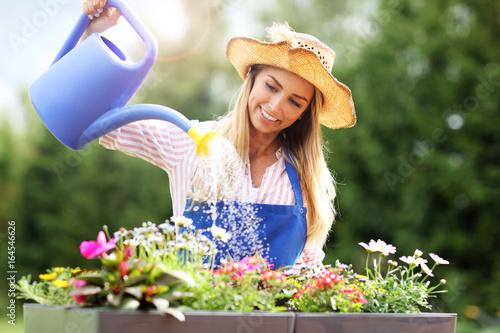Obraz Woman watering plants outside in summer - fototapety do salonu