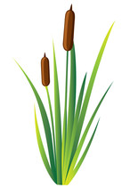 Swamp Canes Water Reed Plant Cattails Green Leaf Grass Environment Swamp, Lake And River. Vector Illustration Web Site Page And Mobile App Design
