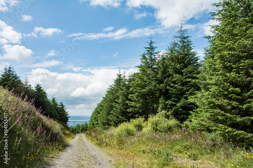 Tuinposter Heuvel Path in a forest on a sunny summer day - Irish hills