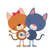 colorful caricature with couple of cats embraced vector illustration