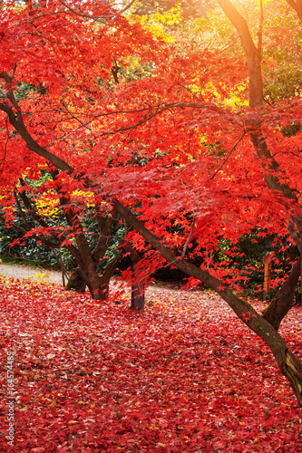 Foto op Aluminium Rood Beautiful Colorful Autumn landscape. wonderful picturesque scene.
