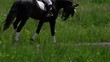 A beautiful girl in white hair and white clothes is riding a black brown stallion. The girl makes the horse perform various beautiful movements. Sunny summer day on a green glade.