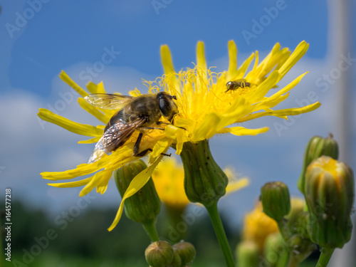 In de dag Bee A wasp at work