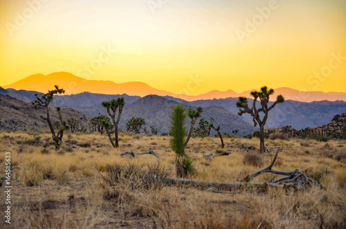 Fotobehang Zwavel geel California Desert Panorama in Joshua Tree National Park