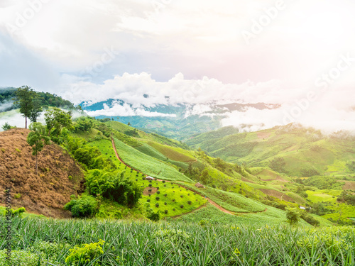 Poster Lime groen beautiful green mountain and clouds in northern of thailand.