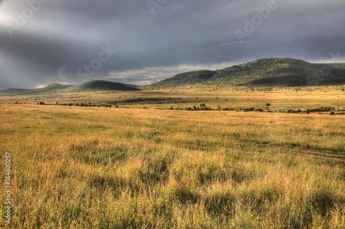 Montage in der Fensternische Honig Safari Park - Maasai Mara - Kenya