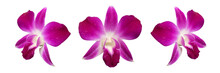 Purple Orchid Isolated On Whit...