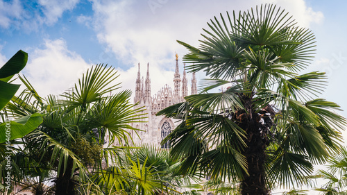 Autocollant pour porte Milan Palm and banana trees on Piazza Duomo in Milan, Italy