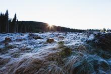 Mittelgebirge Harz Im Winter R...