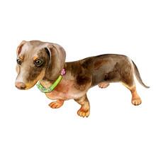 Watercolor Dog Dachshund Portr...