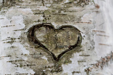 Heart Carved On The Bark Of A ...