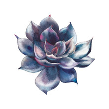 Watercolor Black Succulent. Ha...
