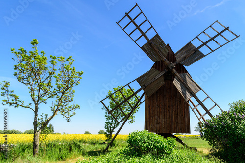 Aluminium Prints Mills Old wooden windmill and a small tree in open landscape. Rapeseed field in background.