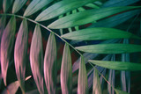 Tropical leaves on pastel pink background. floral background - 164711465