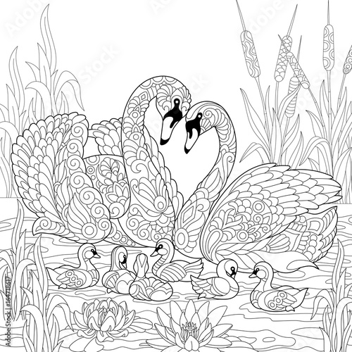 Coloring book page of swan birds family, lotus flowers and ...