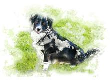 Dog, - Watercolor / Illustrati...