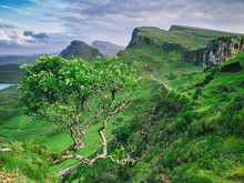 View Of The Fantastic Quiraing In Isle Of Skye With A Hardy Rowan Tree Growing On The Very Edge Of A Cliff. Scottish Highlands, United Kingdom