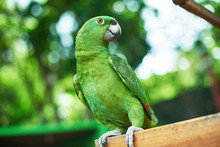 Green Parrot Sitting On Branch