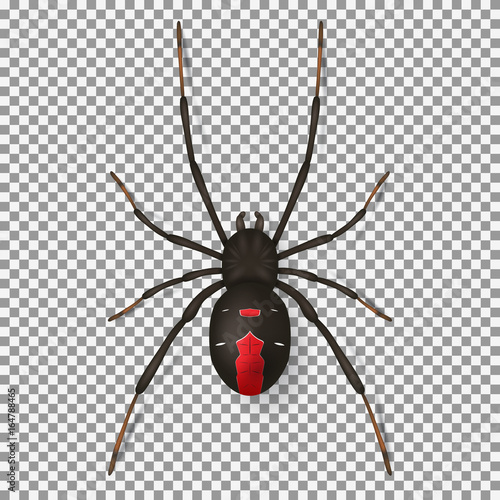 Photo  Black spider isolated on transparent backdrop