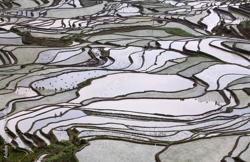 Poster Rijstvelden Terraced rice fields in Yuanyang county, Yunnan, China