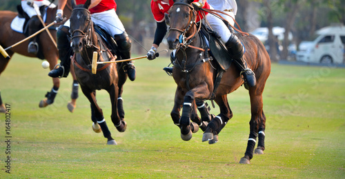 Photo  Polo horse player riding a horse to hit a ball in match.