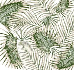 Fototapetagreen leaf of palm tree on white background
