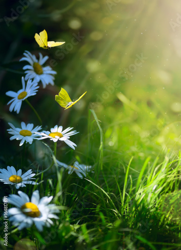 art abstract spring background or summer background with fresh flowers and butterfly