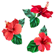 Three Beautiful Red Hibiscus Flowers With Leaves