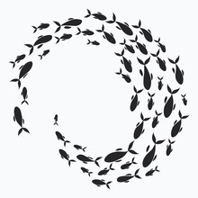 School Of Fish. A Group Of Sil...