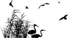 Heron Couple Between Black Reeds And Five Gulls