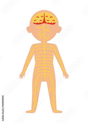 Boy Body Anatomy With Nervous System Health Medical Icon Internal