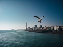Brighton, Seagul, United Kingdom, Great Britain