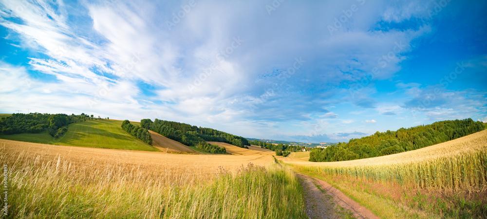 Fototapeta Panorama of wheat field in the morning in Kansas