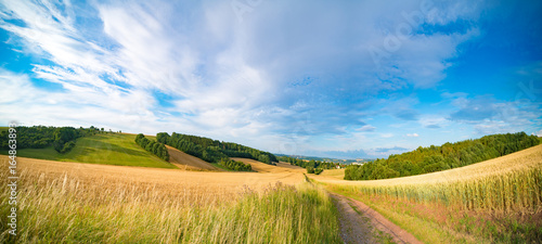 Foto op Canvas Cultuur Panorama of wheat field in the morning in Kansas