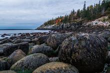 Dulse On Boulders, Little Hunters Beach