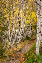 Jesup Trail, Maine