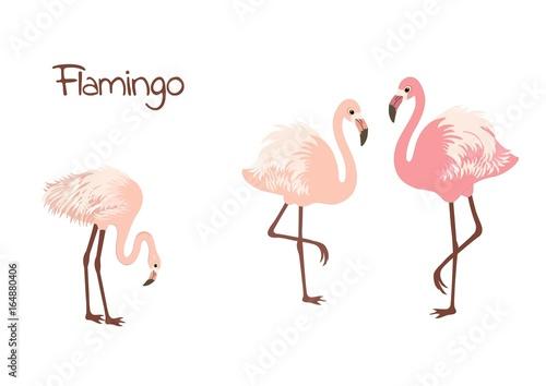 Canvas Prints Flamingo Bird Cute flamingo birds