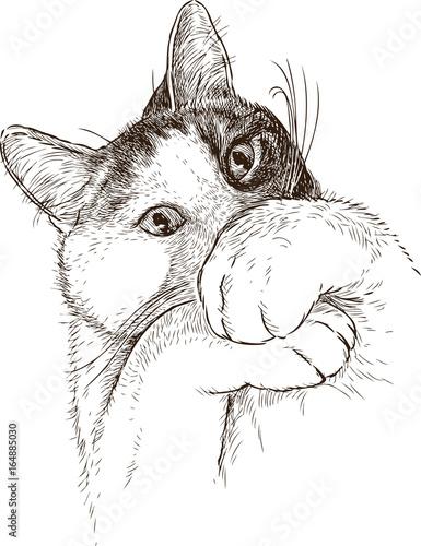 Photo sur Toile Croquis dessinés à la main des animaux Sketch of a frightened domestic cat