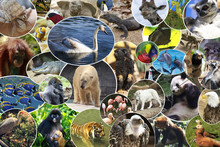 Collage Of Various Animals And...