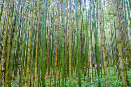 Papiers peints Bambou Beatiful view of bamboo forest at Arashiyama, Kyoto, Japan