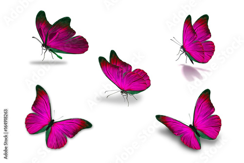 fifth pink butterfly