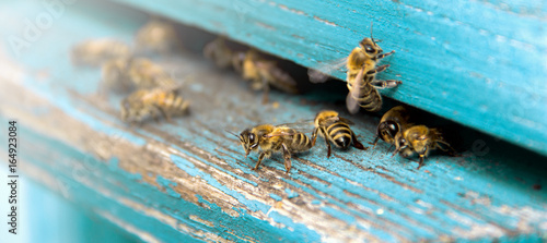Photo Life of bees. Worker bees. The bees bring honey.