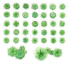 Various Green Trees, Bushes And Shrubs, Top View For Landscape Design Plan. Vector Illustration, Isolated On White Background.