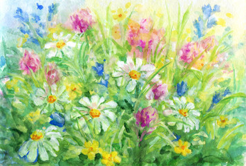 Obraz Wild flowers - watercolor background painting.