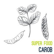 Carob. Super Food Hand Drawn S...