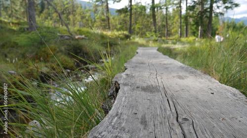 Tuinposter Weg in bos Holzweg über ein Moor - Gebiet in den Österreichischen Almen und Bergen