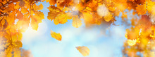 Autumn Leaves Sky Background