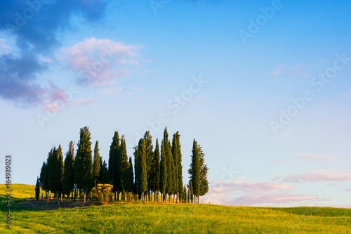 Poster Bleu Beautiful Tuscany landscape